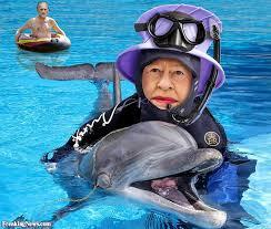 queen-dolphin